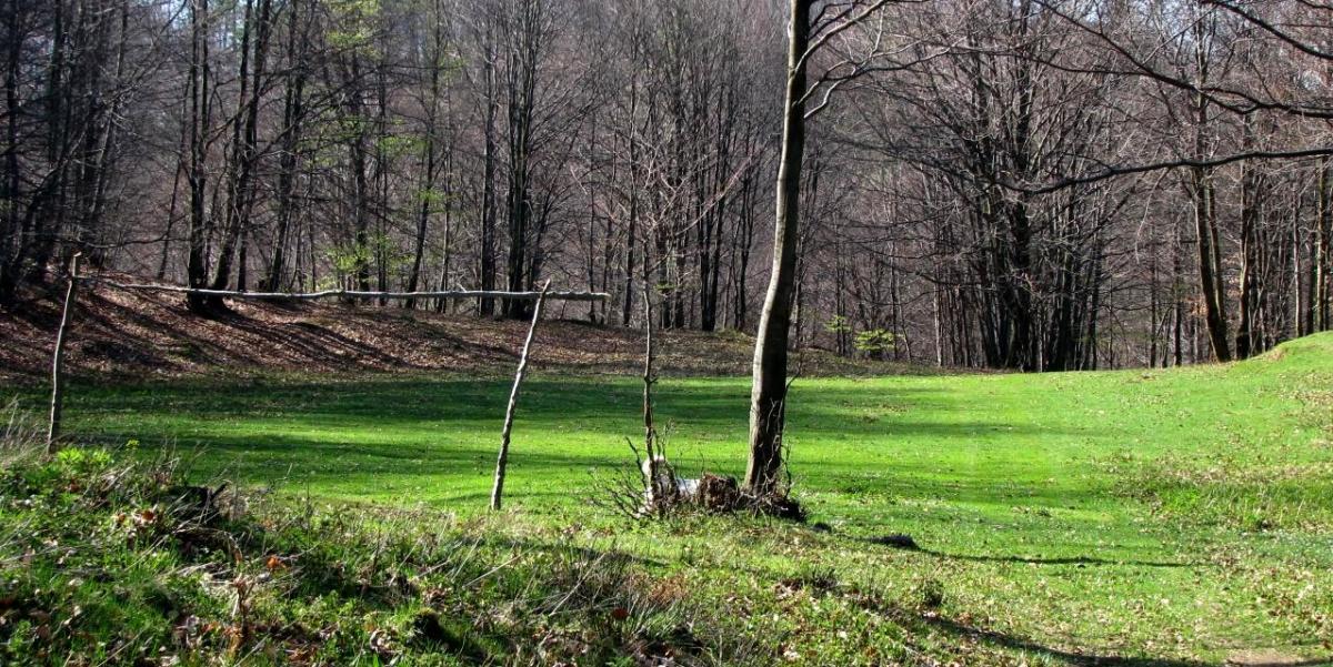 Cavnic Spring 2009