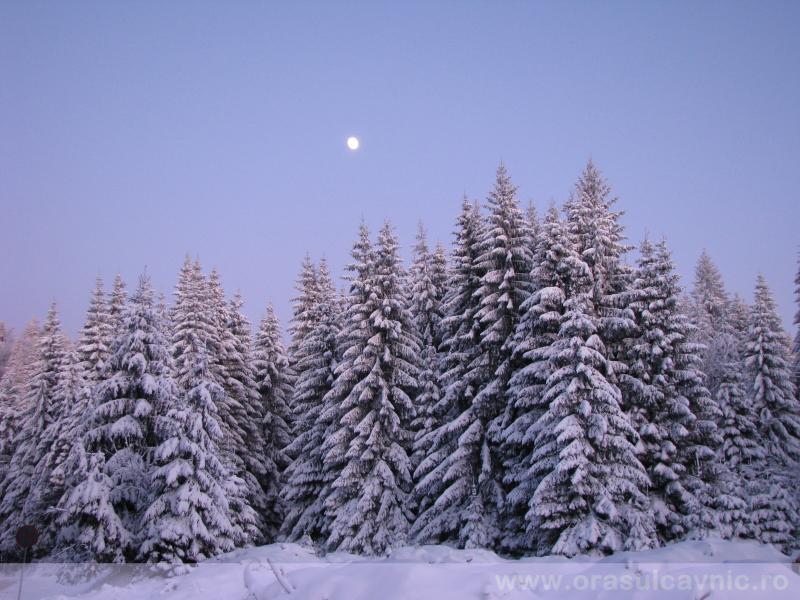Cavnic, iarna